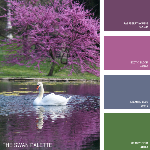 The swan palette