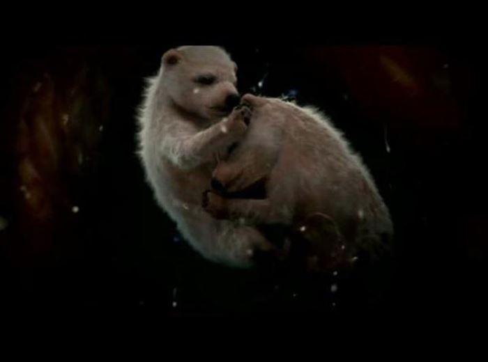 جنین خرس قطبی