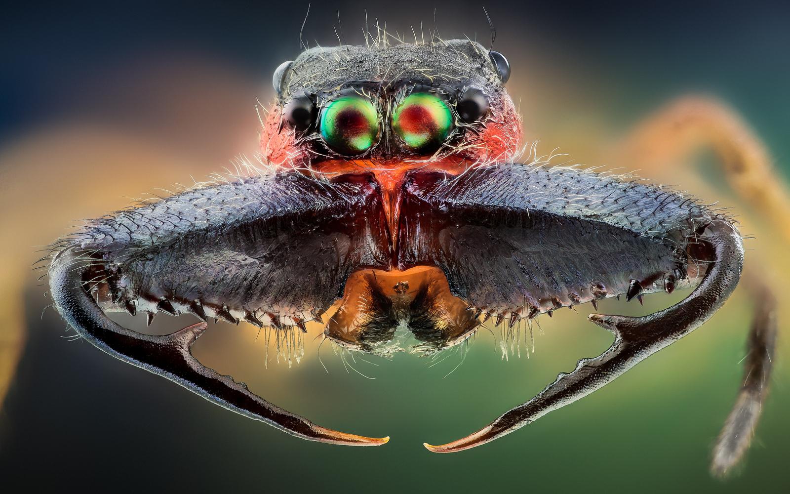 macro-insects-hq-john-hallmen-12