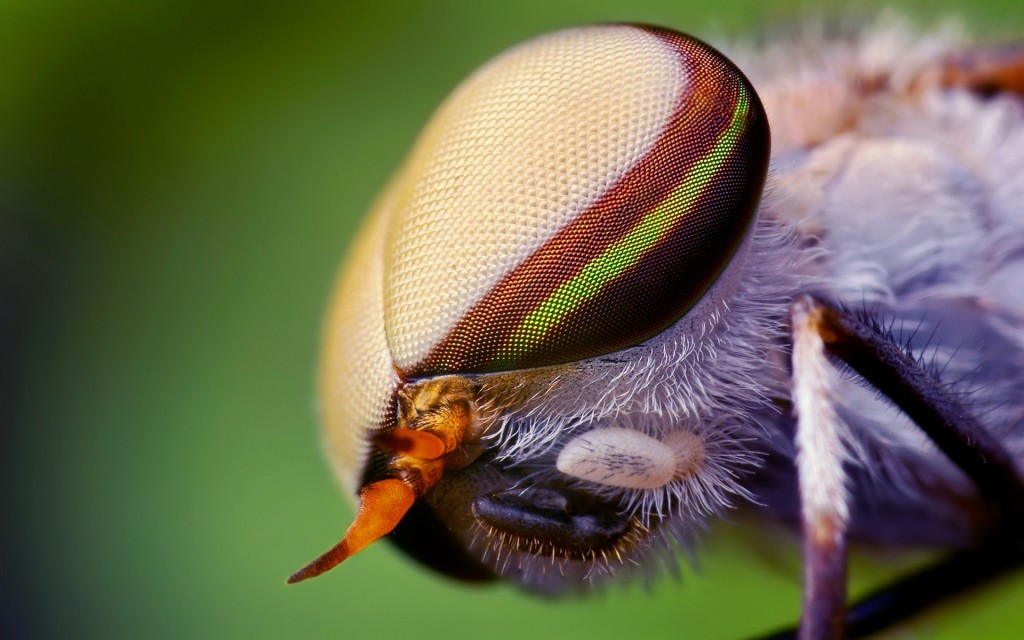 nature-eyes-animals-insects-wildlife-fly-macro-hd-wallpape