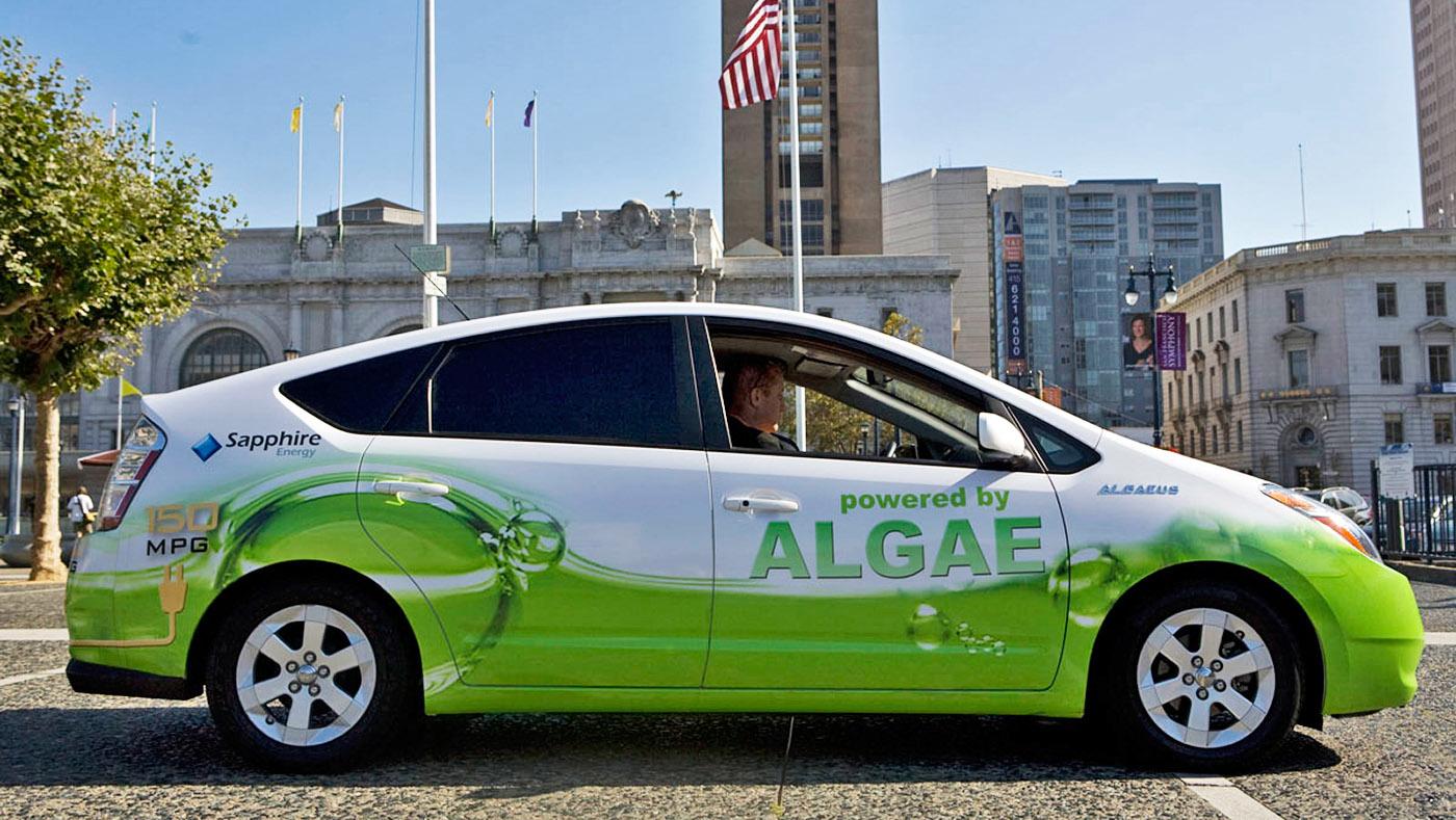 ۶-algaeus