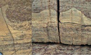 کشف قدیمی ترین فسیل جهان
