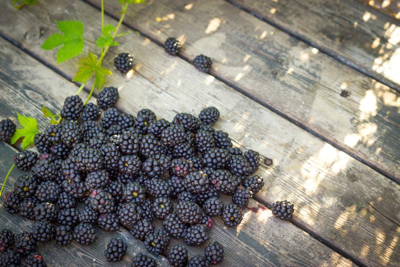میوه لاغری میوه های لاغر کننده شکم