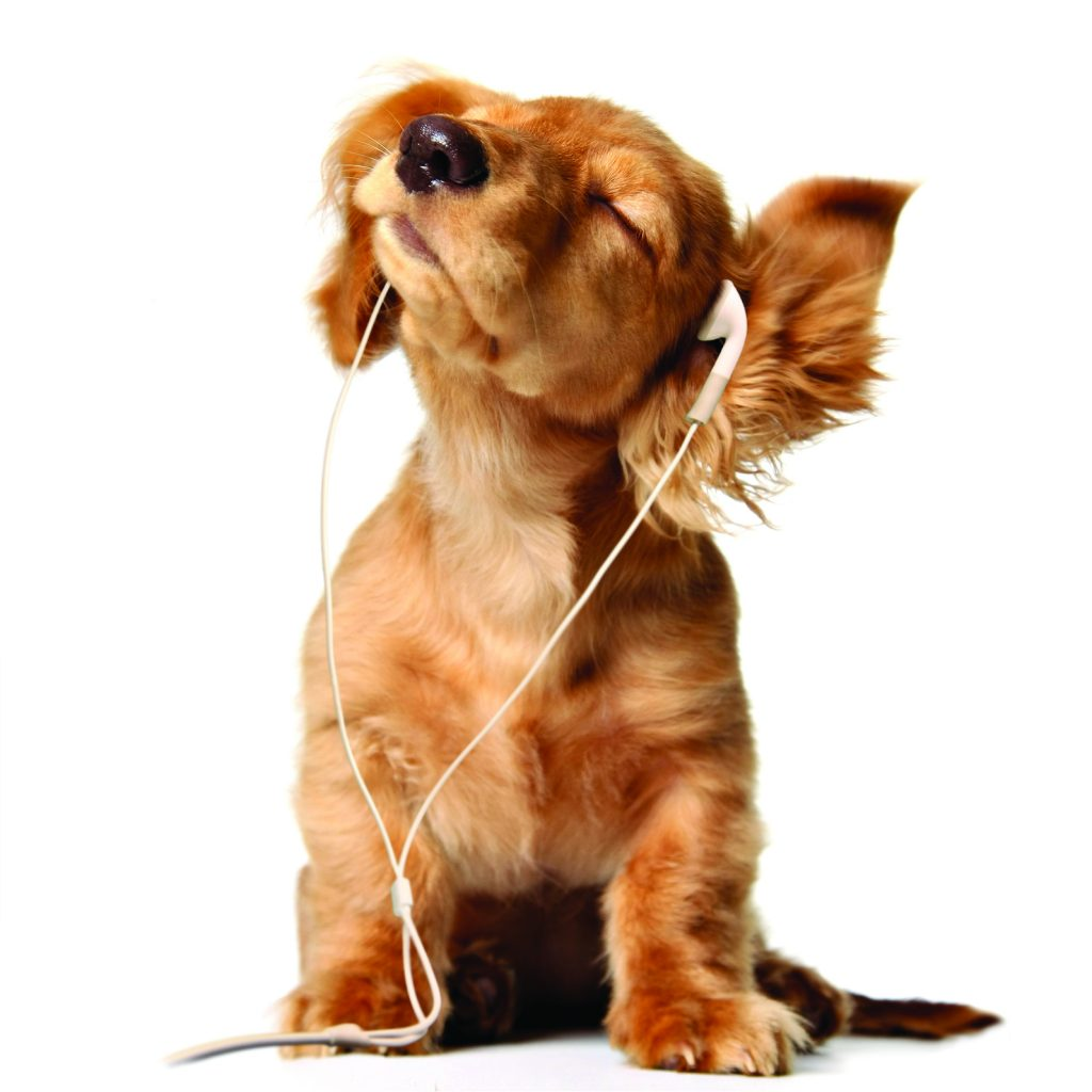 سگها به شنیدن موسیقی واکنش نشان میدهند