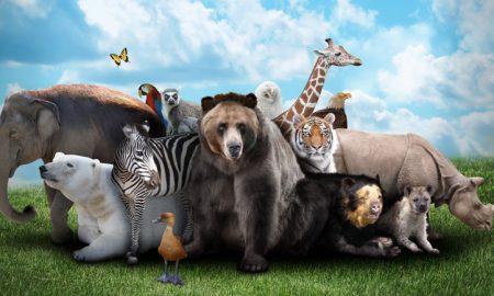 تست روانشناسی حیوانات