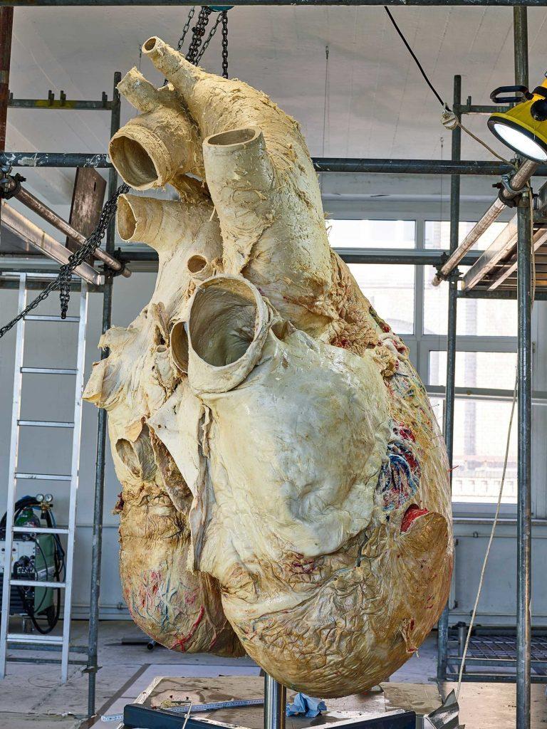 whale_heart