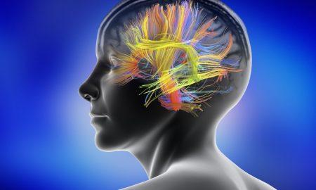 سن بلوغ مغز