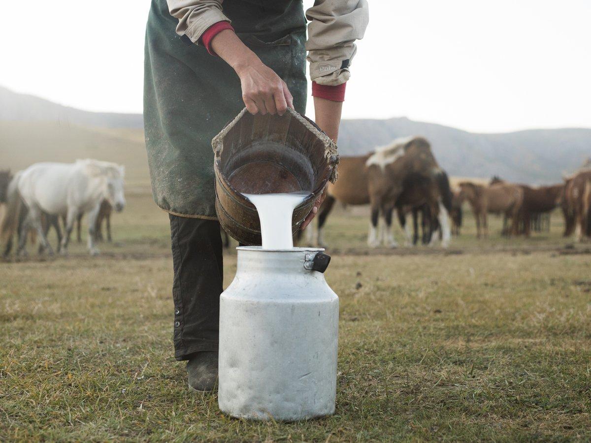 خواص شیر اسب