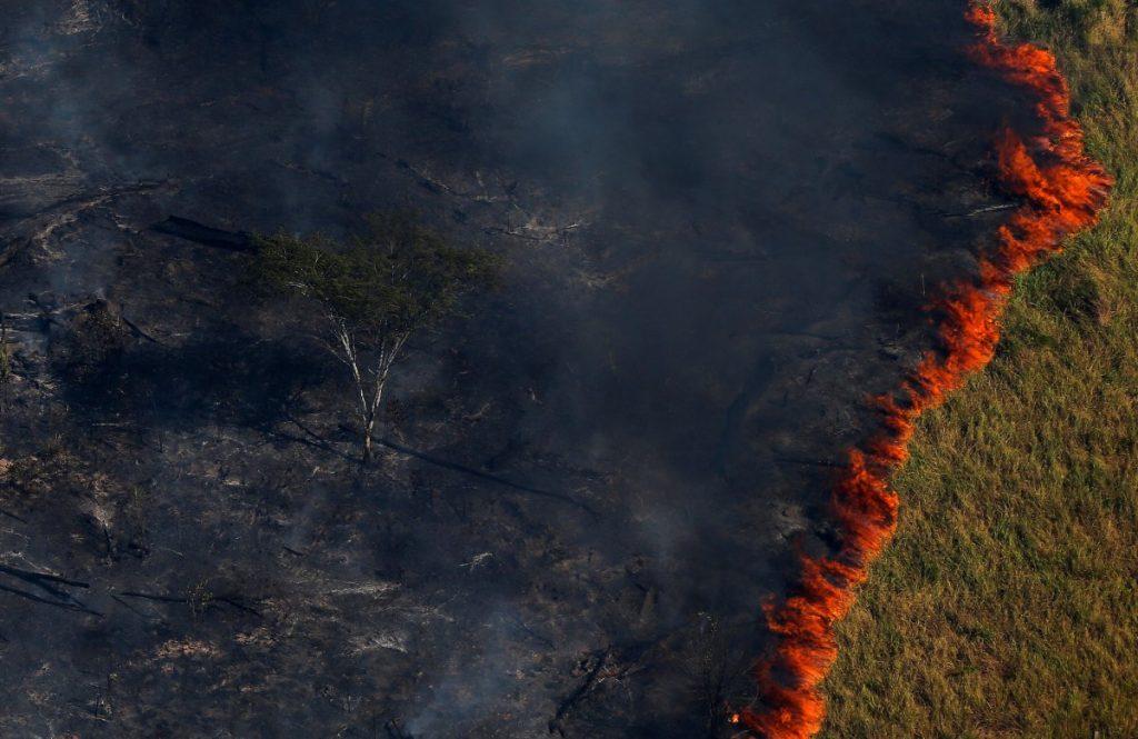 نمایندگان موسسه محیط زیست و منابع طبیعی قابل احتراق، جنگل را برای مبارزه با ورود غیر قانونی در ایالت آمازوناس، برزیل، سوزاندند.