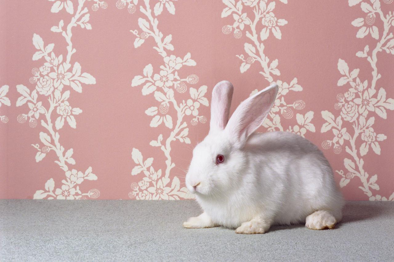 بازی با خرگوش