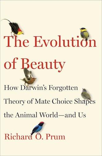 تکامل زیبایی