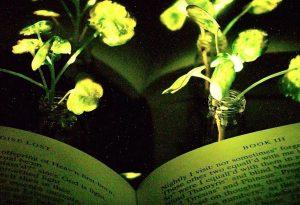 جایگزینی گیاهان درخشان به جای لامپ در آینده نزدیک