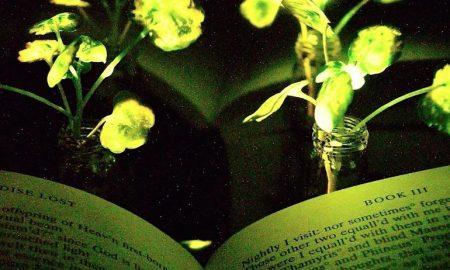 گیاهان نورانی