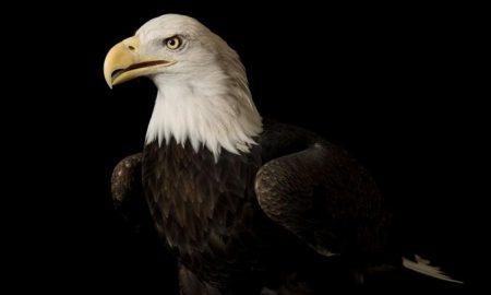 کمیاب ترین و خاص ترین عقاب های کنونی جهان