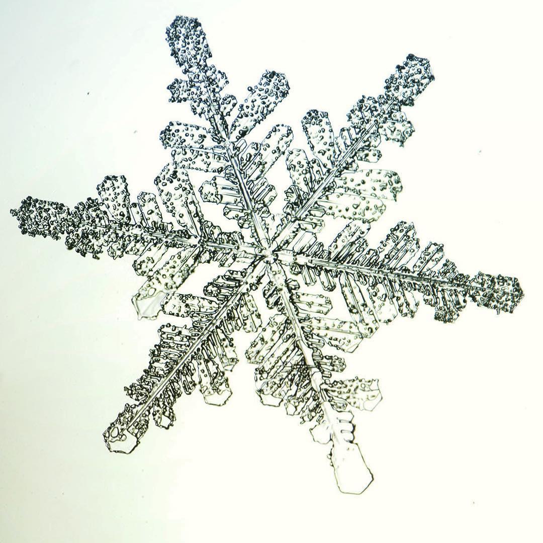 زیبایی خیره کننده بلورهای برف از نمای نزدیک