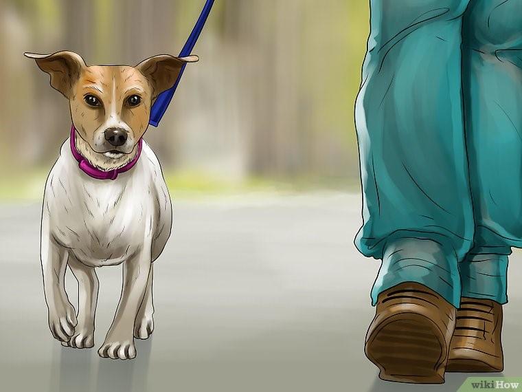 سگ خود را راه ببرید تا ماده تهوع آور عمل کند