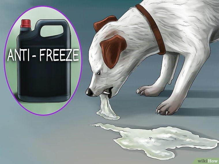سگ مسموم