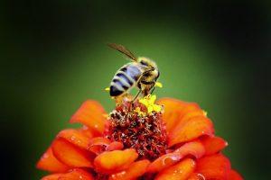 خواص گرده گل یا گرده زنبور عسل