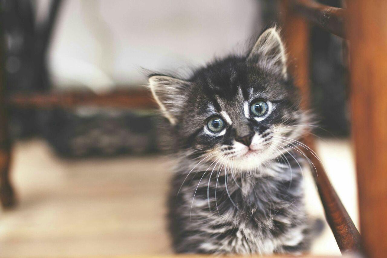 نکات آموزشی گربه را جدی بگیرید