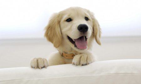 بی حوصلگی سگ را چگونه رفع کنیم ؟
