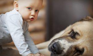 سگ و کودک