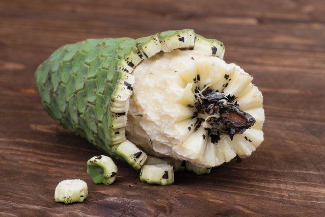 میوه Monstera جایگزین موز