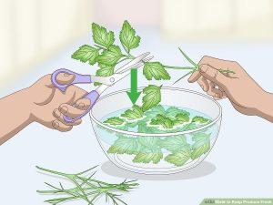 گیاهان نرم را پس از بریدن با قیچی در آب قرار دهید.