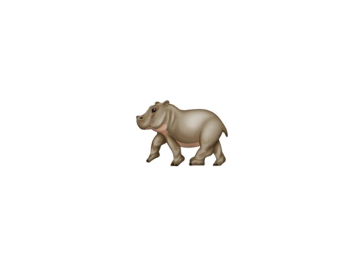کرگدن Hippopotamus
