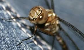 پرورش حشرات ماقبل از تاریخ