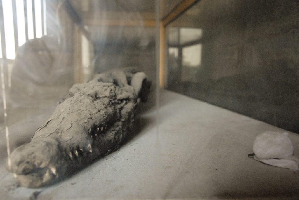 ژنهای کروکودیل مومیایی شده یک فرضیه باستانی مصری را تأیید می کنند!