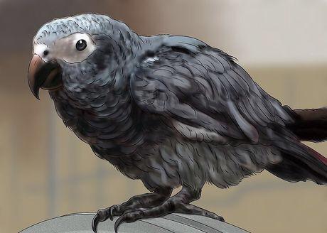 طوطی خاکستری آفریقایی طوطی کاسکو حیوانی باهوش و دقیق