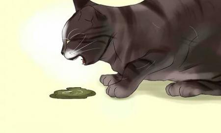 درمان استفراغ در گربه ها