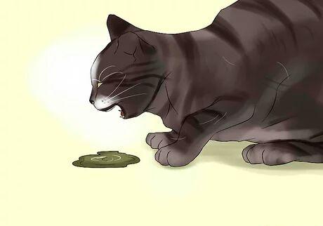 درمان استفراغ گربه ها