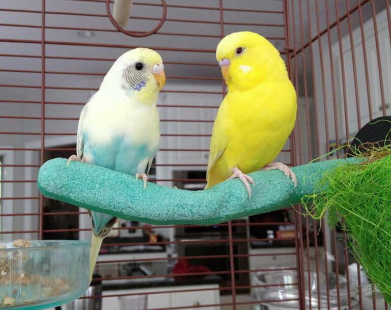 مراقبت از پرنده بیمار