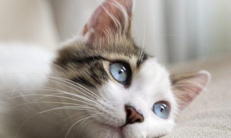 گربه ها دنیا را چگونه می بینند