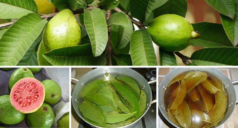 از آن جایی که این میوه برای رشدش نیاز به نور مستقیم خورشید دارد، خواص بسیاری را در خود نگه میدارد