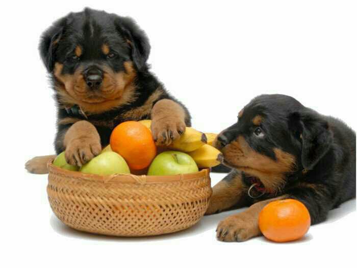 14 مورد از سالم ترین سبزیجات و میوه ها برای سگ شما
