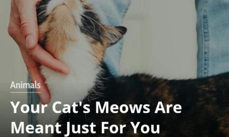 میو میو کردن گربه