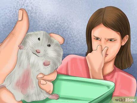 اطمینان از نیاز همستر به حمام
