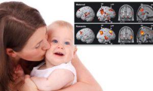 رشد مغز جنین تحت تاثیر سلامت این دستگاه در بدن مادر است