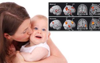 ارتباط مستقیم بین سلامت مادر و رشد مغز جنین تا دوسالگی
