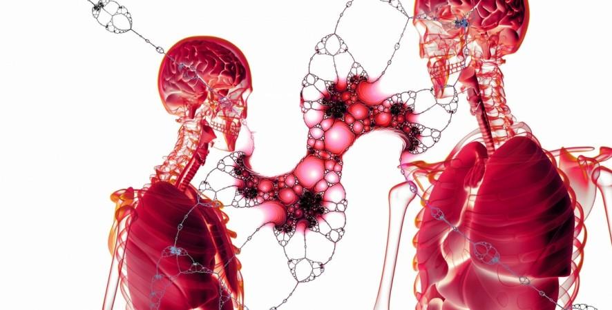 1522279800 cells - کشف اندام جدید در بدن انسان توسط پژوهشگران دانشگاه هاروارد با نام Interstitium