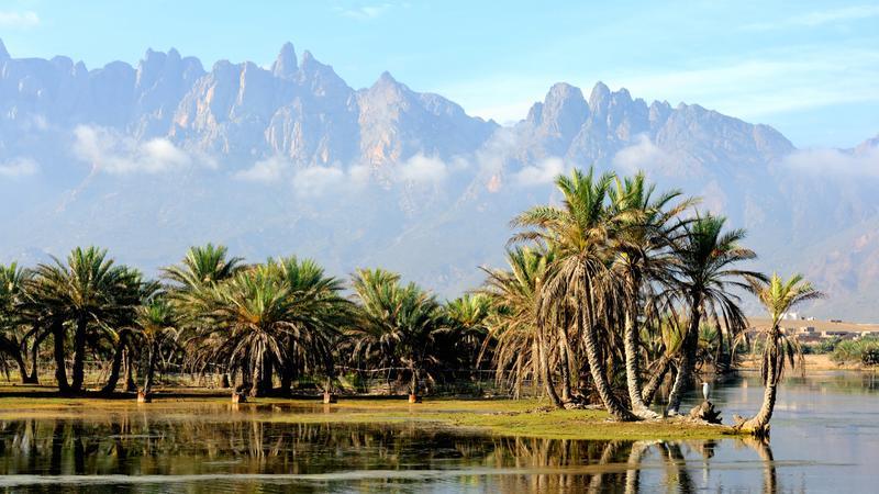 جزیره ی Socotra، یمن