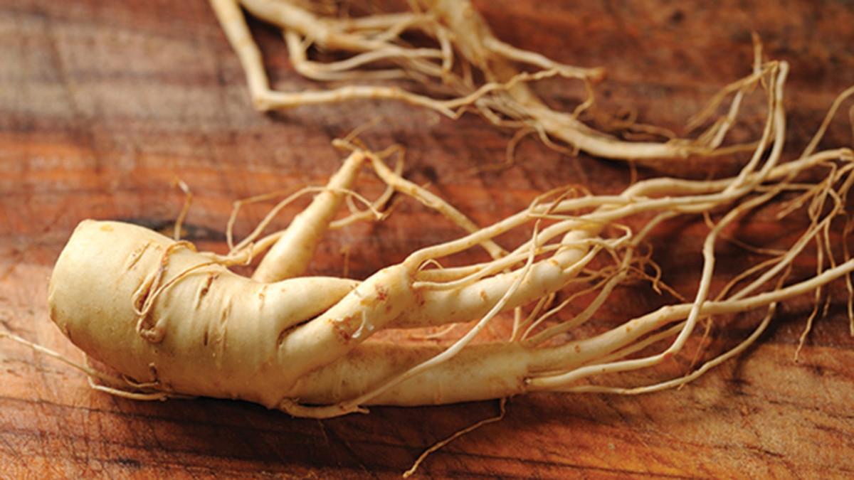 burdock-root1