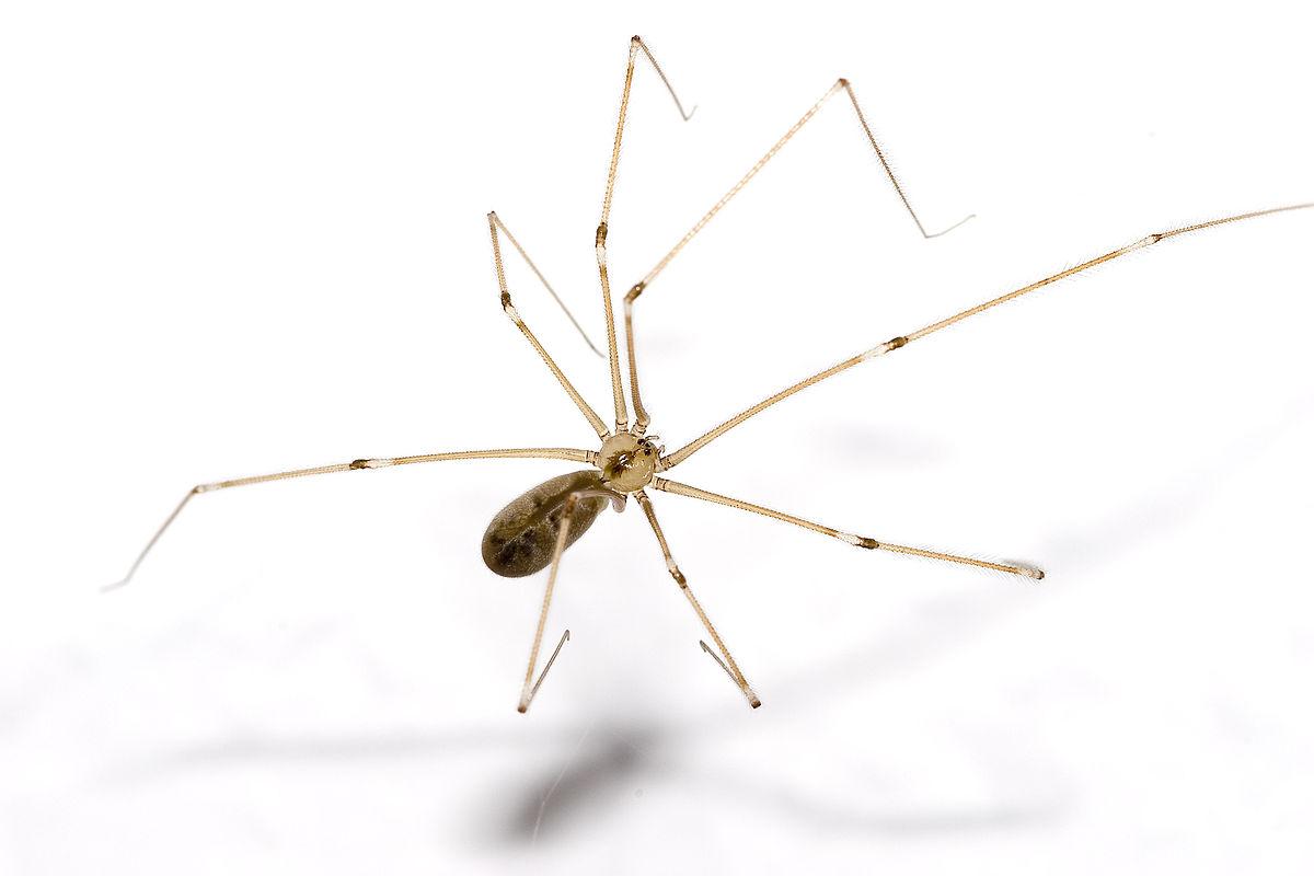 کشتن عنکبوت مضر است؛ بر اساس این دلیل علمی نباید عنکبوت را بکشید!