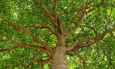 ضربان قلب درختان