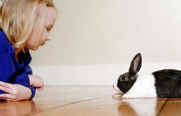 هنگامی که خرگوش گاز میگیرد، به آرامی او را هل دهید. سپس با کلمات خوب صدایش کنید. این کار را تا زمانی انجام دهید که دیگر گاز گرفتن را تکرار نکند.