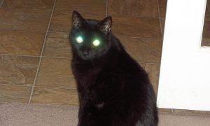 درخشش چشم گربه در شب