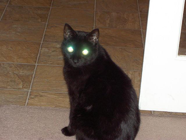 دلیل علمی درخشش چشم گربه در شب