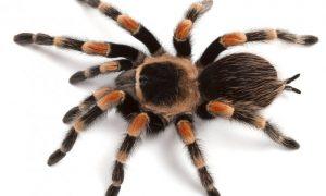 کشتن عنکبوت